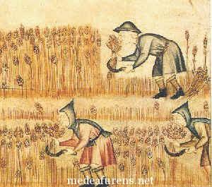 Servo della gleba